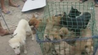 Çin'de 'Köpek eti festivali' için 40 bin köpek kesildi